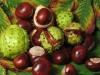 Каштан ( плод измельченный)