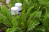 ВИТА РА+33 (фибромиомы, миомы, кисты, доброкачественные опухоли и образования)